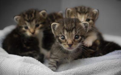 Achat et adoption de chien et de chat