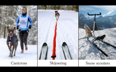 In winter, three sports activities with your dog!