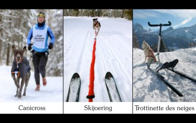 L'hiver, trois activités sportives avec son chien !